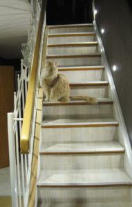 Katzen Model